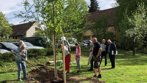 baumpflanzung park schmerlenbach