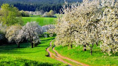 Freizeit Tagungszentrum Schmerlenbach Wandern Natur